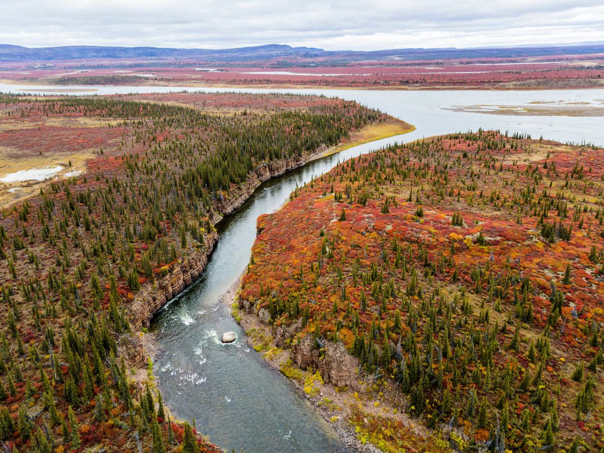 An aerial photo of the Kendall River merging with the mighty Coppermine River. Spruce trees dot the orange and red moss-covered landscape.